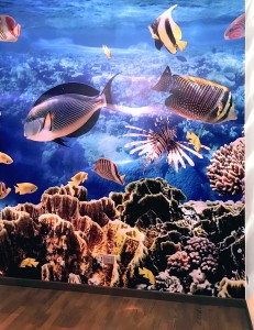 wall film acquario